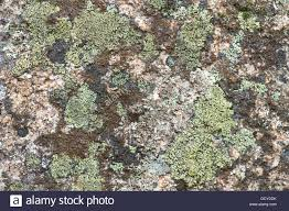 Andalucia Spain Map by Map Lichen Rhizocarpon Geographicum Andalucia Spain Stock Photo