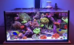 best lighting for corals best nano reef tank 2018 reviews top picks guide