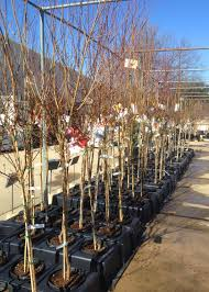 the family tree garden center the arborists u0027 journal it u0027s time to plant fruit and nut trees