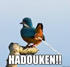 Meme Bird - funny bird meme meme my day