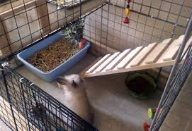 How To Build An Indoor Rabbit Hutch How To Build A Rabbit Cage Using Cubes Advice For Indoor Rabbits
