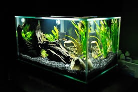 Fluval Edge Aquascape Show Off Your Fluval Edge Tank Thread Freshwater Photography