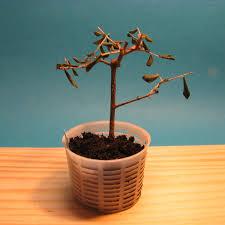 net pot planter mediterranean bonsai olive bonsai