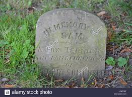 headstones for dogs sam a fox terrior dog s headstone in the pet cemetery priory