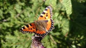 small butterfly images pixabay free pictures