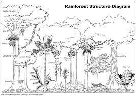 drawn rainforest jungle landscape pencil and in color drawn