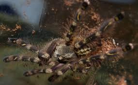 tarantulas by experience level pethelpful