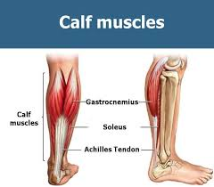 Simple Calf - the best calf workout for mass growing the most stubborn