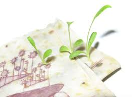 plantable paper green gifts eco friendly gifts that you can feel about