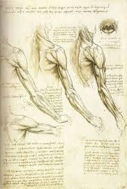 leonardo da vinci u0027s anatomical drawings by sraffa on deviantart