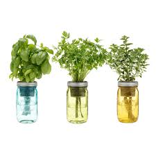 mason jar indoor herb garden grow your own herbs uncommongoods