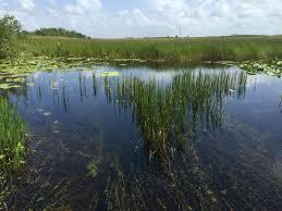Everglades National Park Map Florida U0027s Natural Filter Everglades National Park Wlrn