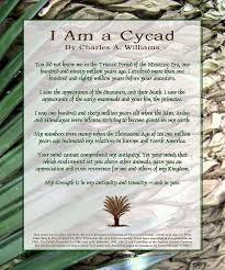 i am a cycad poem