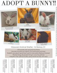 rabbit poster posters and flyers from hrs and our partners house rabbit society