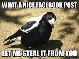 Facebook Post Meme - what a nice facebook post let me steal it from you let me steal