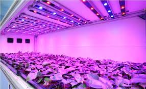 plant grow lights lowes plant lights lowes led grow light bulbs indoor plant grow lights