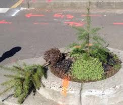 tiny tree returned to tiny portland park after theft huffpost
