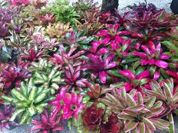Ready For Spring by Care Archives Bromeliad Paradise