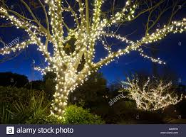 outdoor trees been decorated with white lights and against