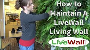 how to maintain the livewall indoor living wall system youtube