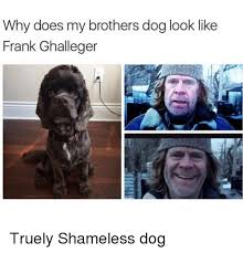 Shameless Meme - why does my brothers dog look like frank ghalleger truely