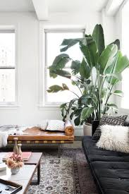 14 best plants images on pinterest at home architecture and balcony