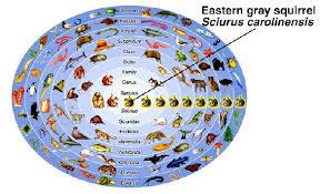 1 3 domains and kingdoms shell lake science grade 7