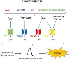 cough and airway disease the role of ion channels sciencedirect