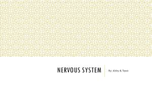 nervous system by abby u0026 tessa terms brain encephal o