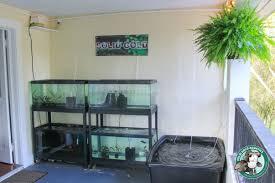 fish room tour u2013 solid gold aquatics