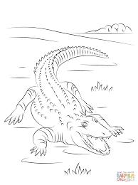 alligator coloring pages cute nile crocodile coloring page free printable coloring pages