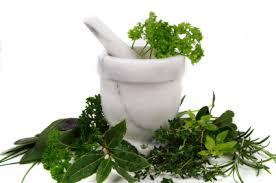 matanomo 5 tanaman herbal pendongkrak stamina