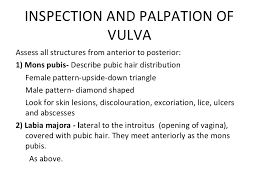 mons pubis hair the gynaecological examination ppt