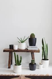 cactus home decor every home needs a little green in it we love clustering succulents