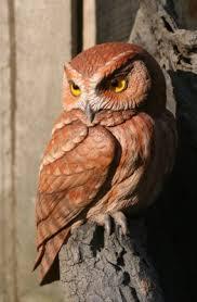eastern screech owl eastern screech owl wood carving
