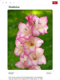 the 25 best birth flower for august ideas on pinterest birth
