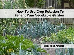 how to use crop rotation to benefit your vegetable garden