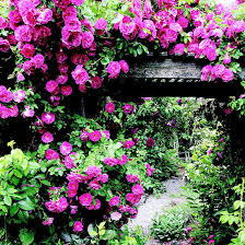 Gardening Zones Canada - top roses for the mountain west