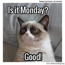 Good Meme Grumpy Cat - grumpy cat meme funny grumpy cat meme monday good grumpy cat