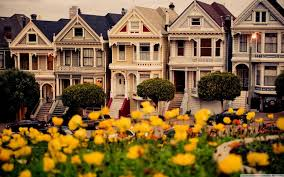 flowers san francisco flowers san francisco wallpaper 2560x1600 16088 wallpaperup