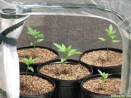 ikea u0027s miniature greenhouse lets anyone create their own indoor