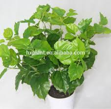 small potted plants potted plant plants tropical plants artificial small potted plant