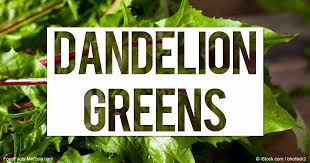 Dandelion Facts What Are Dandelion Greens Good For Mercola Com