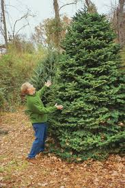 shop for the right tree southern living