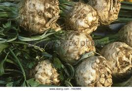 Celery Root Vegetable - nodules root stock photos u0026 nodules root stock images alamy
