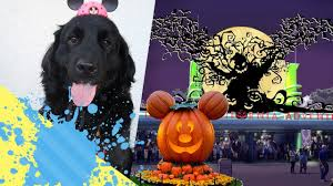 lam halloween party halloween time disneyland 2017 with a puppy youtube