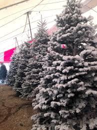 santa s trees