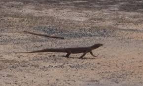 Seeking Lizard Cast Lizard Island And The Great Barrier Reef S V Blue Heeler