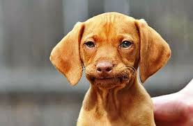 Frowning Meme - frowning dog blank template imgflip