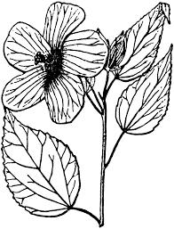 hibiscus clipart etc
